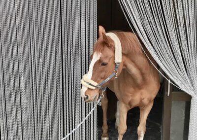 Un cavallo passa la tenda antimosche krismar senza problemi dopo un breve periodo di adattamento. Se la tenda si sporca a causa del passaggio regolare di animali domestici, può essere facilmente pulita.